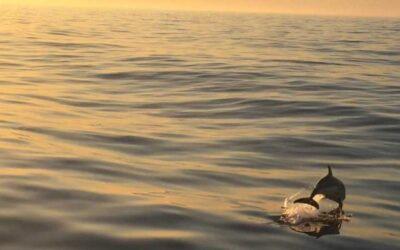 Avistando una ballena y delfines en alta mar